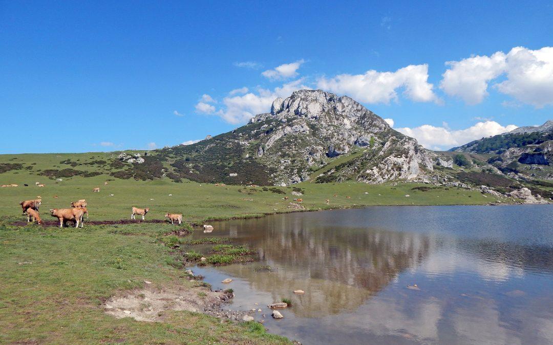 Medio Ambiente ratifica la entrega de más de 500 millones para inversiones en biodiversidad, agua y restauración medioambiental