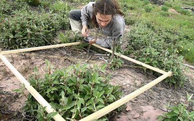 La empresa de desarrollo rural Sylvestris reforestará más de 2.200 hectáreas de bosque tras la inyección económica de Fundación Repsol