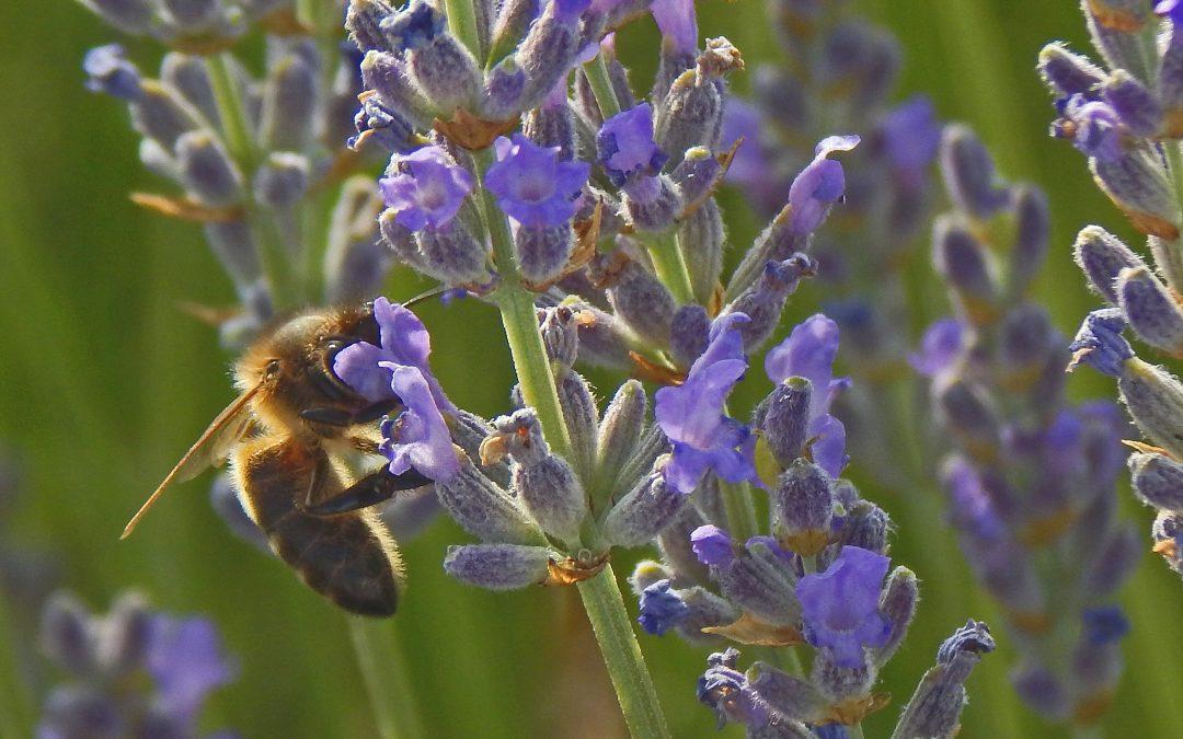 Informes y libros sobre biodiversidad que se publicarán durante 2020