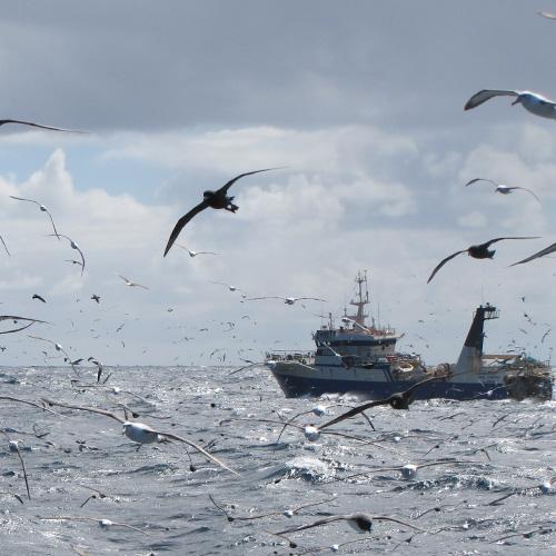 La mitad de los españoles cambian sus hábitos de consumo de pescado para proteger la vida oceánica, según la 'charity' Marine Stewardship Council