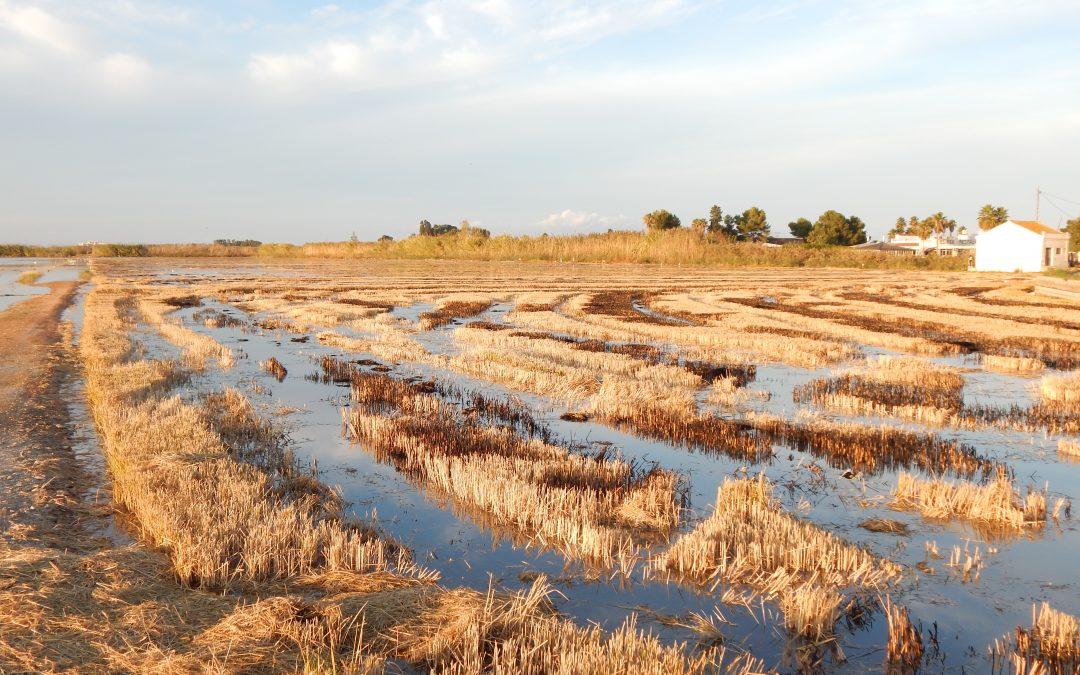 La circularidad del agua como oportunidad de avance en el Plan de Recuperación