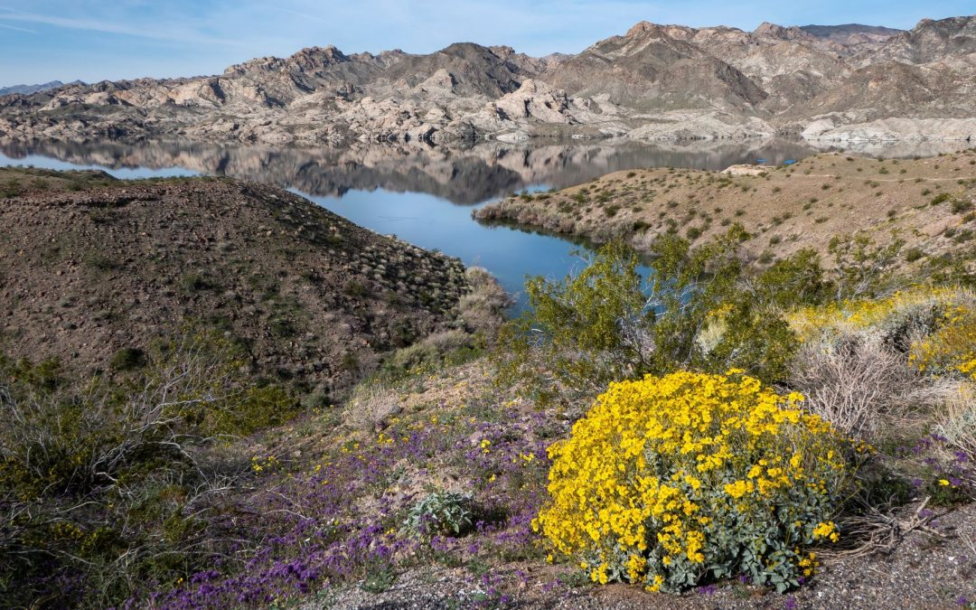 40 Million People Rely on the Colorado River. It's Drying Up Fast