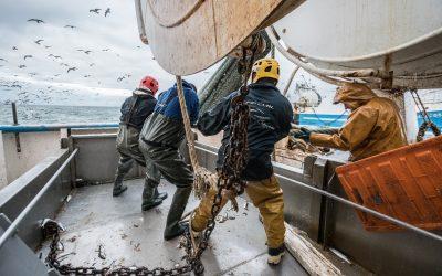 La captura combinada de caballa, arenque y bacaladilla ha rebasado los límites sostenibles en casi cinco millones de toneladas de peces desde 2015